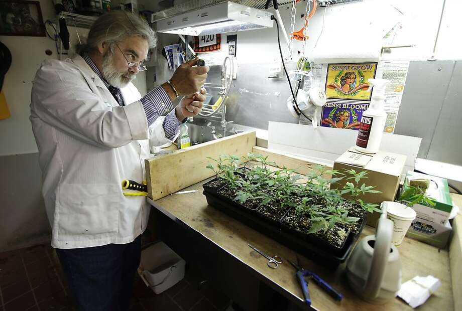 Marijuana for medical and recreational use is now legal in Washington state. Photo: Ted S. Warren, Associated Press