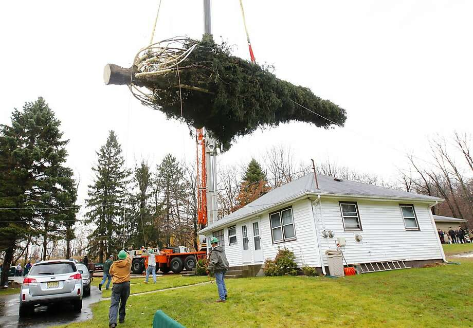 Crews use a crane to hoist a 80 ft. tall, 50 ft. diameter, 10-ton Norway Spruce tree from its base at the home of Joseph Balku in Flanders, N.J., Tuesday, Nov. 13, 2012. The tree will be laid onto a flatbed truck and transported to New York City where it will be this years Rockefeller Center Christmas Tree. Photo: Rich Schultz, Associated Press