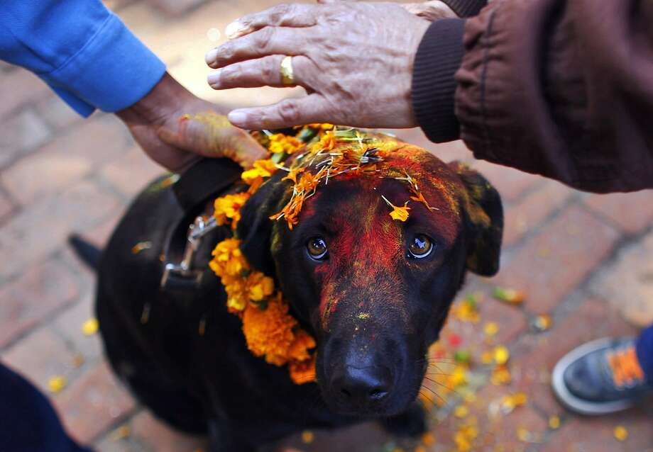 What have I done to deserve this? Nepalese cops apply vermillion 