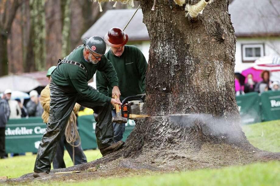 Crews cut down an 80 ft. tall, 50 ft. diameter, 10-ton Norway Spruce tree that will this years Rockefeller Center Christmas Tree at the home of Joseph Balku in Flanders, N.J., Tuesday, Nov. 13, 2012.   The tree survived the winds of Superstorm Sandy that left a path of destruction in this New Jersey town and left Balku without electricity for weeks. Photo: Rich Schultz, Associated Press / FR27227 AP