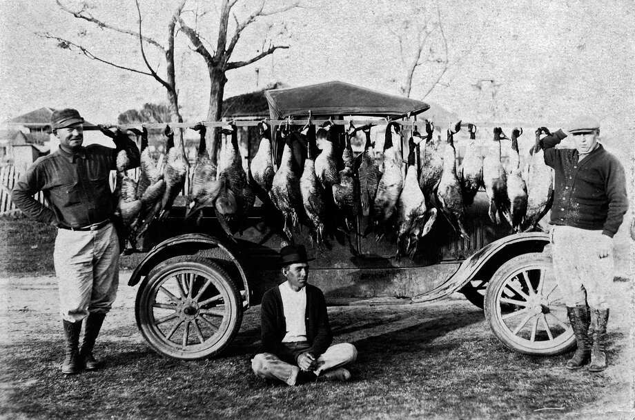 Hunters at the Eagle Nest and Mener Lake Fish and Game Preserve in 1923 show off their take of Greater Canada geese. These geese were once the most common goose along the Texas coast and the only goose waterfowlers deemed worth pursuing. Photo: Picasa