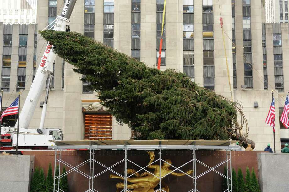 The 80-foot-tall tree from the property of Flanders, N.J., resident, Joe Balku, is lifted into place at Rockefeller Plaza in New York, Wednesday, Nov. 14, 2012. Photo: Carmine Galasso, AP / The Record of Bergen County