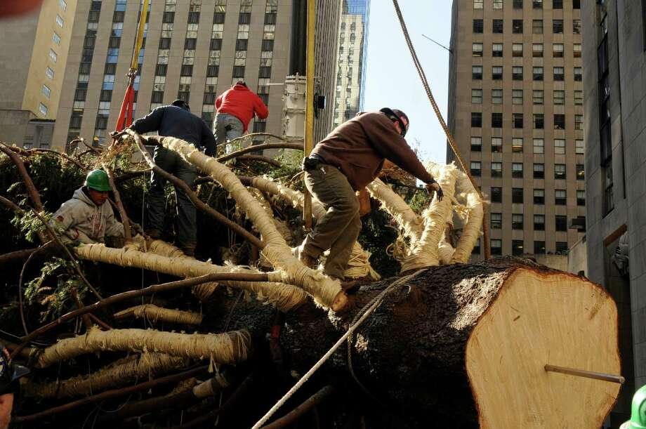 Construction crew ready a 80-foot-tall tree from the property of Flanders resident, Joe Balku, is about to be lifted into place at Rockefeller Plaza in midtown Manhattan in New York. Photo: Carmine Galasso, AP / The Record of Bergen County