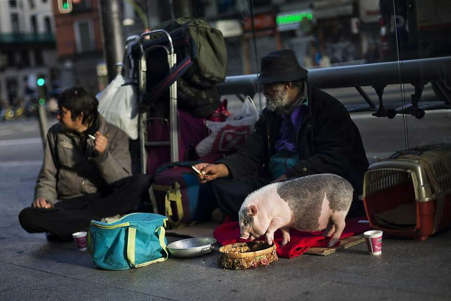 A homeless couple beg for money while feeding their Vietnamese pig Sarah in Madrid. Photo: Daniel Ochoa De Olza, Associated Press