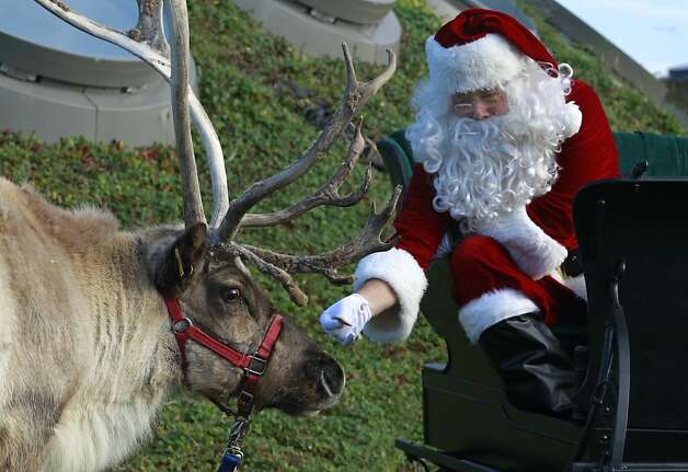 Occasionally Santa actually feeds an animal he's supposed to feed. (Academy of Sciences in San Francisco.) Photo: Paul Chinn, The Chronicle