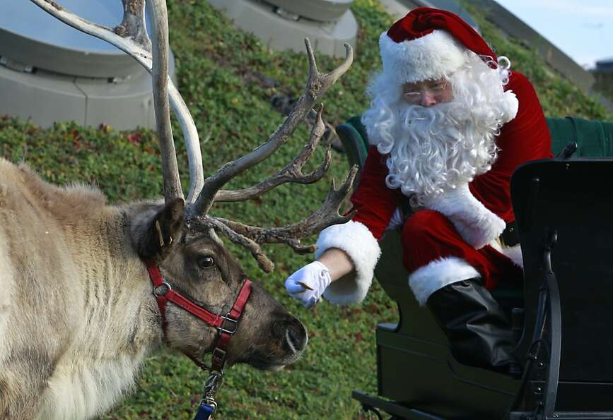 Occasionally Santa actually feeds an animal he's supposed to feed. (Academy of Sciences in Sa