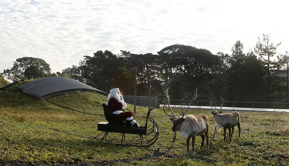 Santa Claus and two of his reindeer rest on the living roof of the California Academy of Sciences. Photo: Paul Chinn, The Chronicle