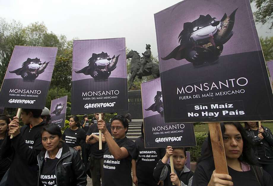 """Activists of the global environmental watchdog Greenpeace demonstrate against US biotech giant Monsanto and the commercial sowing of transgenic corn, at """"Parque de los Venados"""" in Mexico City, on November 5, 2012. Photo: Pedro Pardo, AFP/Getty Images"""