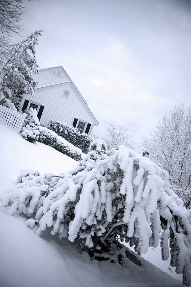 What to do to protect evergreens. (Fotolia.com) Photo: Stuart Monk / Stuart Monk - Fotolia