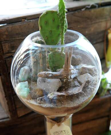 A cactus garden selling at $68 at the The Botanic Studio on Friday, Nov. 9, 2012 in Troy, N.Y. (Lori Van Buren / Times Union) Photo: Lori Van Buren