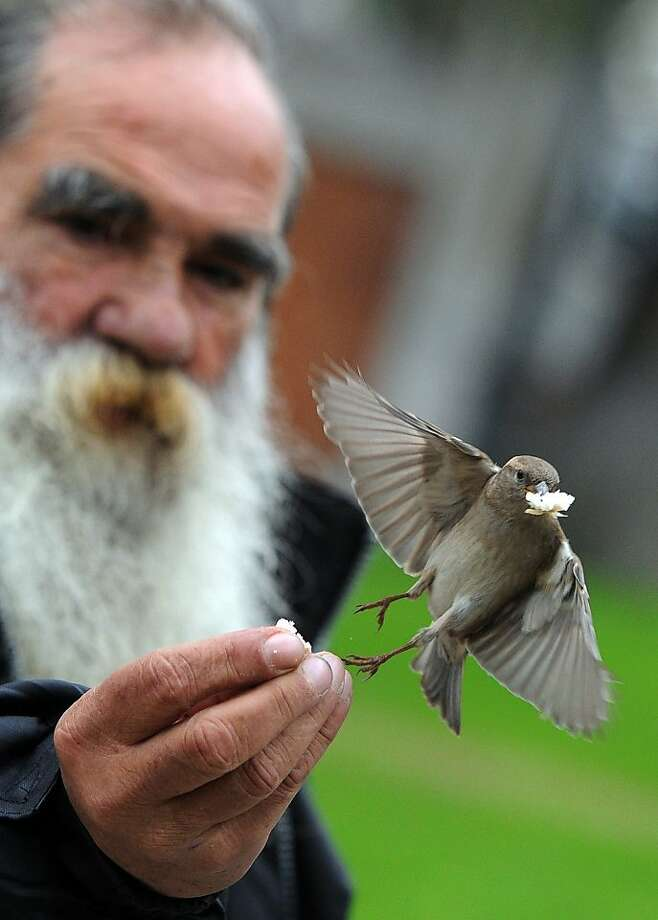 A friend of the feathered feeds a sparrow in the El Prado museum's garden in Madrid. Photo: Dominique Faget, AFP/Getty Images