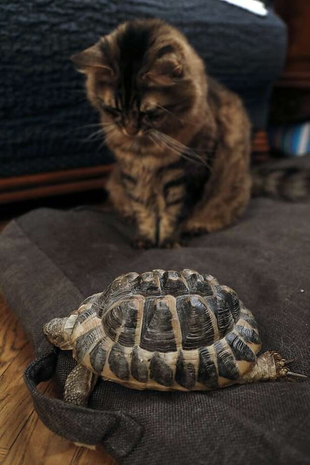 Too slow to chase. Too heavy to play soccer with. Head disappears when you swipe at it. What good is it?! A cat ponders his new companion in a Paris apartment. Photo: Francois Guillot, AFP/Getty Images