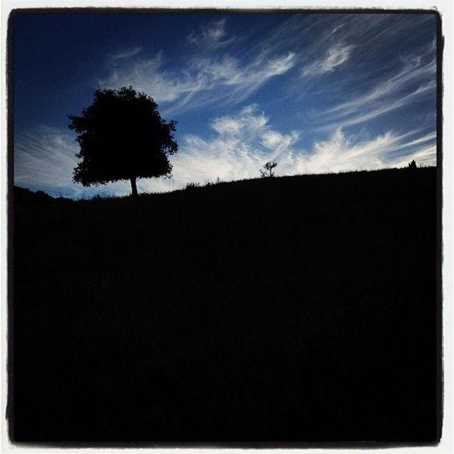 One tree near Black Diamond Mines. http://instagr.am/p/P0s6yMkyWL/ Photo: Carlos Gonzalez, The Chronicle