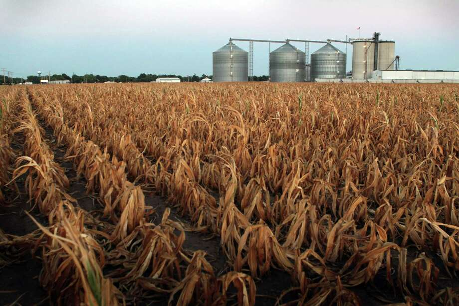 A field of dead corn sits next to the Lincolnland Agri-Energy ethanol plant in July in Palestine, Ill. Photo: Scott Olson, Staff / 2012 Getty Images