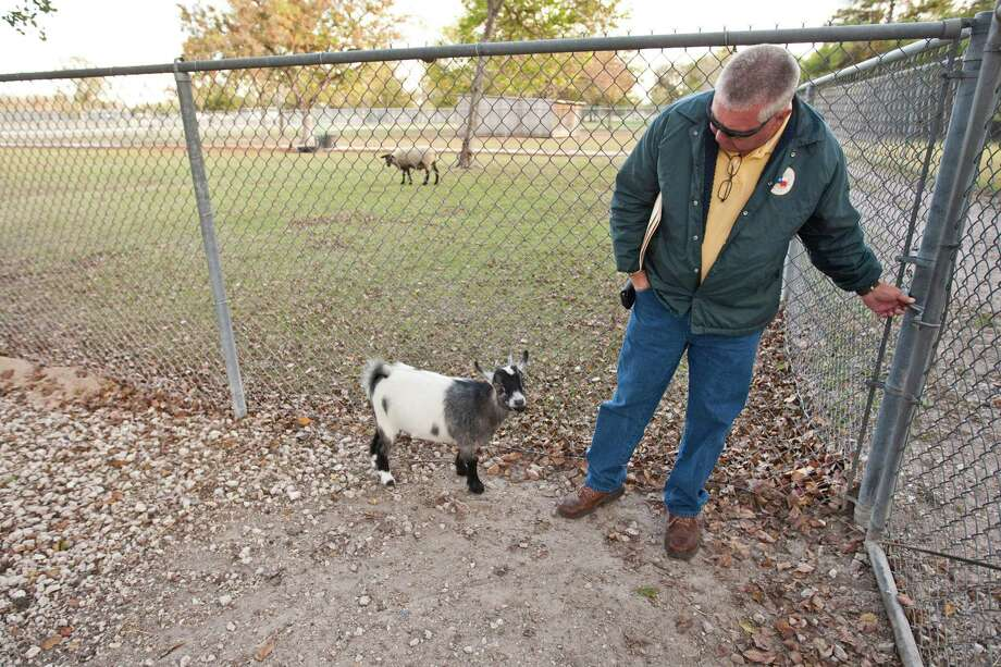 Bear Creek Pioneers Park's Mike McMahan says Pebbles, a goat donated by the Harris County Sheriff's Office, will be a good pal for Charlie, another pygmy goat. Photo: Nick De La Torre, Staff / © 2012  Houston Chronicle