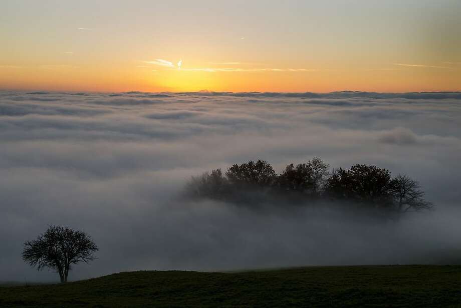 Trees a seen at sunset surrounded by heavy fog hanging above Lake Geneva on November 16, 2012 above Riex near Lausanne, western Switzerland. Photo: Fabrice Coffrini, AFP/Getty Images