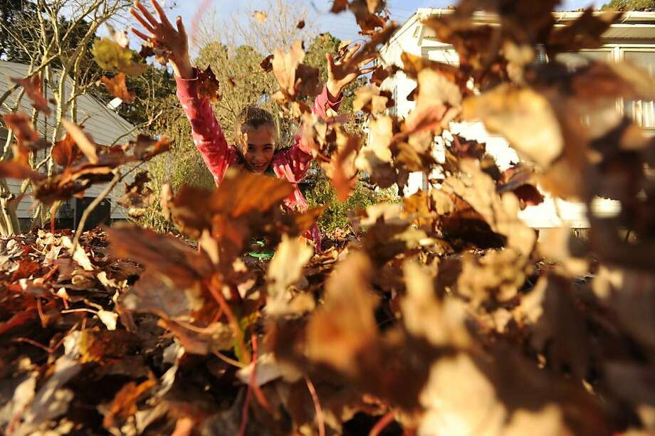 Valery Gariepy plays with a pile of raked leaves in Belle Haven, Va. on Friday, Nov. 16, 2012. Photo: Jay Diem, Associated Press