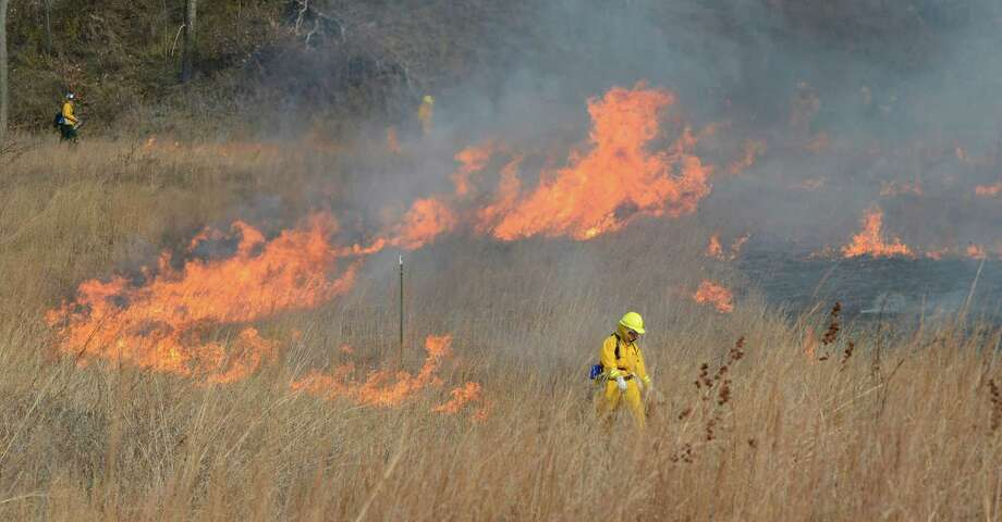 Amanda Dillon, Field Ecologist/Environmental Educator starts a head fire at the Pine Bush Preserve during a prescribed fire to burn off old fuel and revitalize the area in Albany, N.Y. Nov 16, 2012.  (Skip Dickstein/Times Union) Photo: Skip Dickstein / 00020156A