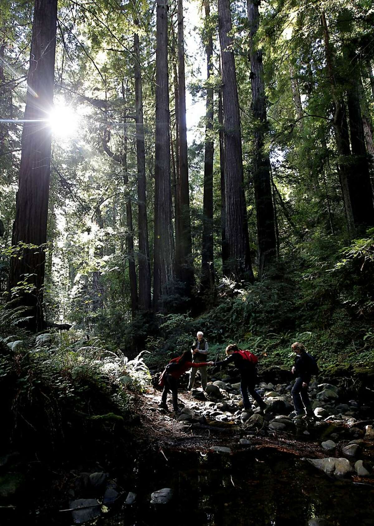 Save the Redwoods League members cross a stream on Wednesday Nov. 14, 2012, along the Peters Creek Loop trail, in La Honda, Calif. where the League has agreed to purchase a parcel near the Peters Creek old-growth forest and establish a conservation easement on Boulder Creek Forest, a total of 359 acres of redwood forests in the heart of the Santa Cruz Mountains. The problem is, they have to raise $2 million for a down payment on the $8 million total price by the end of the year.