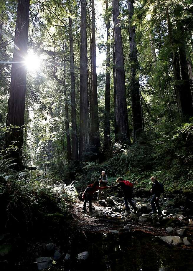 Members of the Save the Redwoods League, which wants to buy a land parcel, hike along Peters Creek. Photo: Michael Macor, The Chronicle