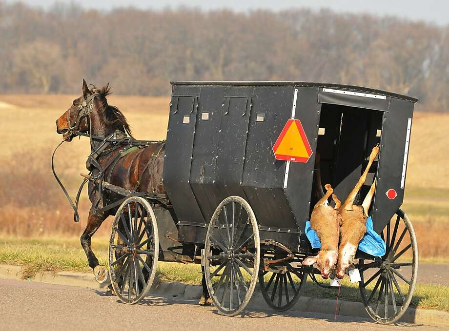 Two deer hang from the back of an Amish buggy on Industrial Rd. in Osseo, Wis. on Saturday, Nov. 17, 2012 during the Wisconsin deer gun season opener.  Photo: Shane Opatz, Associated Press