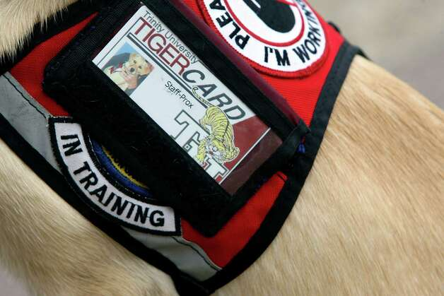 This special harness patch identifies a dog as one being trained at the TSA facility at Lackland. When the TSA center closes, dogs still will be trained at Lackland, but they will be bred by other programs. Photo: HELEN L. MONTOYA, San Antonio Express-News / ©2012 San Antonio Express-News