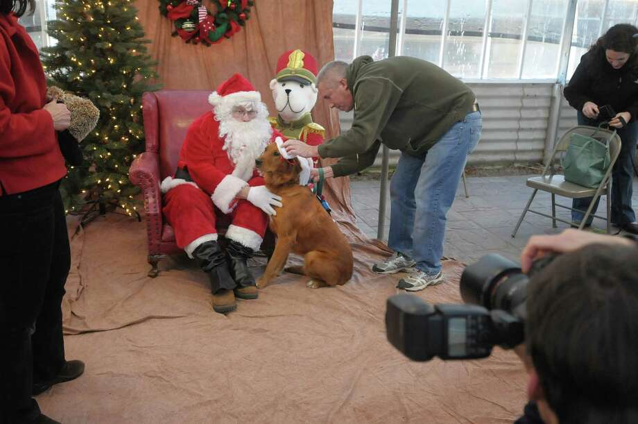 John Grygiel plays the part of Santa as Patrick McGoff puts the finishing touches on his dog Molly and photographer Mike Dack with Red Cottage Photography gets set to take the photos during the Pet Pictures with Santa event at Faddegon's Nursery on Sunday, Nov. 18, 2012 in Latham, NY.  The event has been a benefit for the Animal Protective Foundation which has been doing the event for about 20 years.  Money raised goes towards the APF's animal care and spay/neuter programs.  On December 8 and 9 there will be another AFP pictures with Santa event at the PetSmart at Mohawk Commons in Niskayuna.   (Paul Buckowski / Times Union) Photo: Paul Buckowski
