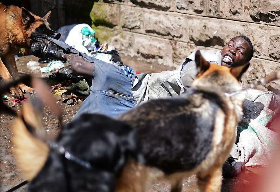 Taking a bite out of crime, police K-9s restrain a suspected looter during rioting in the Somali district of Eastleigh in Nairobi. The violence erupted after a weekend bombing left seven dead and many more wounded. Kenyan residents in Eastleigh turned on Somalis and attacked their shops and stalls, accusing them of being responsible for the bomb. Photo: Carl De Souza, AFP/Getty Images