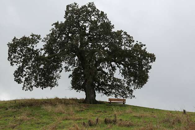 This bench on Sugarloaf Hill offers hikers a chance to rest and take in the sun. Photo: Rashad Sisemore, The Chronicle