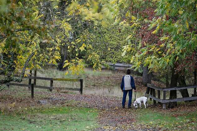Doug Garoutte walks with his dog Nellie nearby Sugarloaf's picnic area after hiking along one of the three miles of scenic trails, which offer ridge-line views of downtown Walnut Creek, Mount Diablo, Las Trampas Ridge, the Briones hills and Shell Ridge. Photo: Rashad Sisemore, The Chronicle