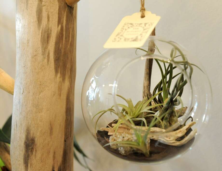 An air plant terrarium selling at $48 at the The Botanic Studio on Friday, Nov. 9, 2012 in Troy, N.Y. (Lori Van Buren / Times Union) (Albany Times Union)