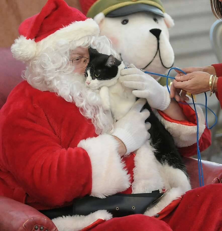 Santa claws: What does squirmy Sherman want for Christmas? To escape from Santa's lap! Sherman was drafted for a photo op benefiting the Animal Protective Foundation at Faddegon's Nursery in Latham, N.Y. Photo: Paul Buckowski, Albany Times Union