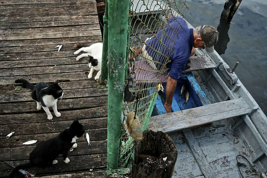 When this Cuban fishermanreturns to the dock in Havana after a day on the water, he's always greeted by a few friends. Photo: Greg Kahn, Getty Images