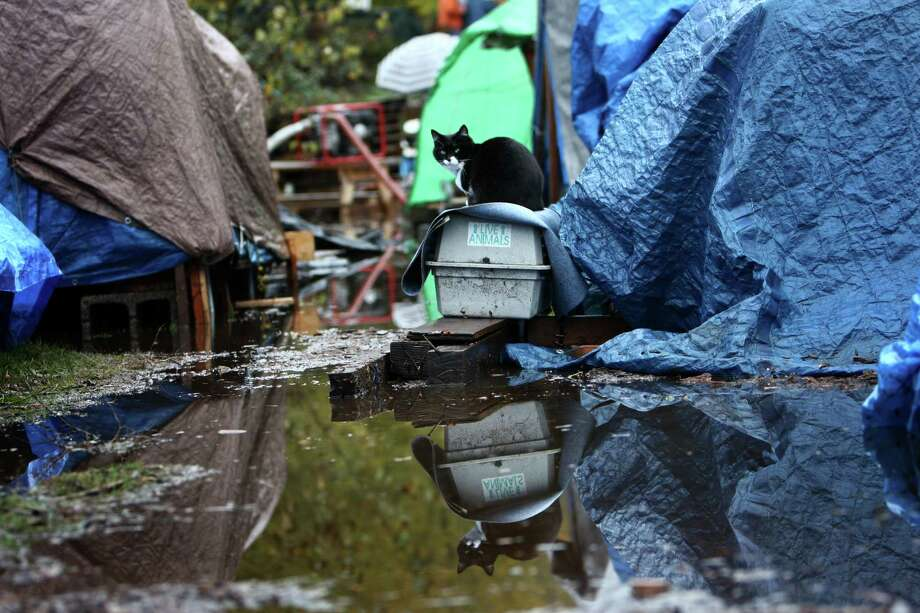A resident's cat seeks high ground after record rainfall flooded Seattle's Nickelsville homeless camp at 7116 West Marginal Way South. Tents and the pallets they rested on were floating after the camp filled with up to one foot of water after Monday's record rain. The camp is in need of dry blankets (fleece), new tarps, tents, dry clothing, and gas to power the pumps and generators. Organizers welcome the donations at the camp, 7116 West Marginal Way South. Photo: JOSHUA TRUJILLO / SEATTLEPI.COM
