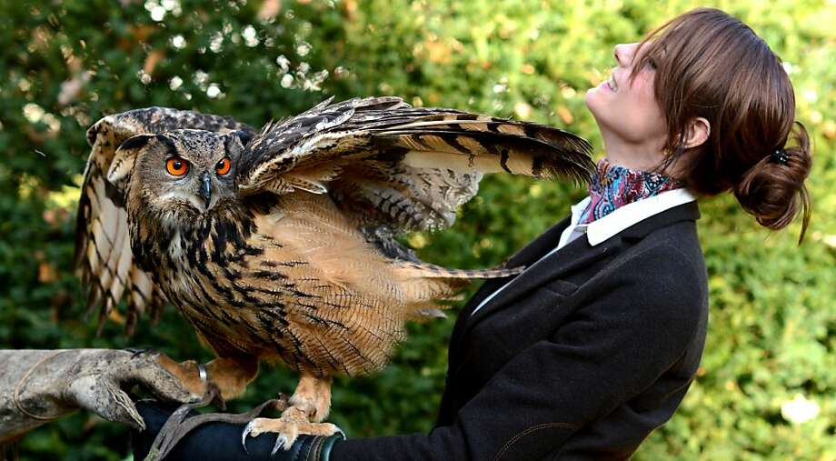 "Pardon my feathers:A flapping owl wings an innocent bystander at a press conference for the upcoming ""Horse and Hunting"" trade fair in Hanover, Germany. Photo: Julian Stratenschulte, AFP/Getty Images"