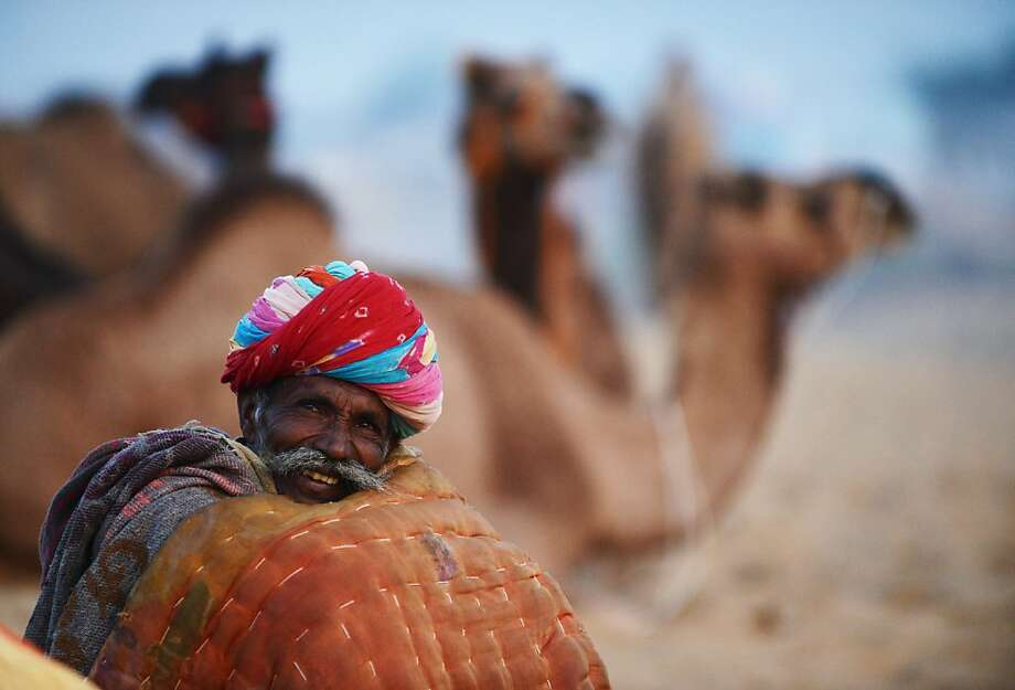 Have I got an ungulate for you: This veteran trader at the Pushkar camel fair could probably sell ice to Eskimos. Photo: Roberto Schmidt, AFP/Getty Images