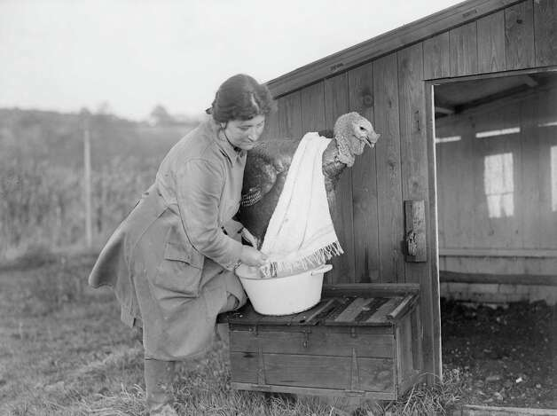 A woman towel-dries a turkey in December 1928 at Mrs. Elce's farm at Nerdigate, near Holmwood in Dorking, Surrey, England. Photo: Fox Photos, Getty Images / Hulton Archive