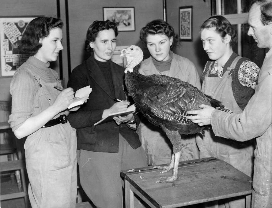 Four land girls in Monmouthshire, southeast Wales, receive a lesson on turkey farming on Nov. 28, 1939, during World War II. Photo: Maeers, Getty Images / Hulton Archive