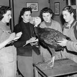 Four land girls in Monmouthshire, southeast Wales, receive a lesson on turkey farming on Nov. 28, 1939, during World War II.