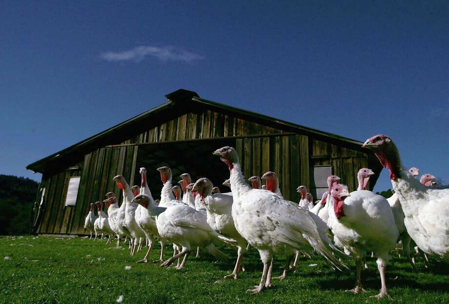 Willie Bird Turkey Farm seems to be a popular place to take pictures. Here's a shot from Nov. 22, 2004. Photo: Justin Sullivan, Getty Images / 2004 Getty Images