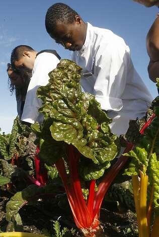 Henry examines a bunch of chard that was grown on the farm worked by Job Corps members on Treasure Island. Photo: Liz Hafalia, The Chronicle / SF