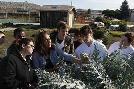 Urban farm coordinator Corey Black  (middle) showing Treasure Island Job Corps culinary students artichokes on the farm onTreasure Island, Calif.,  on Monday, November 19, 2012.