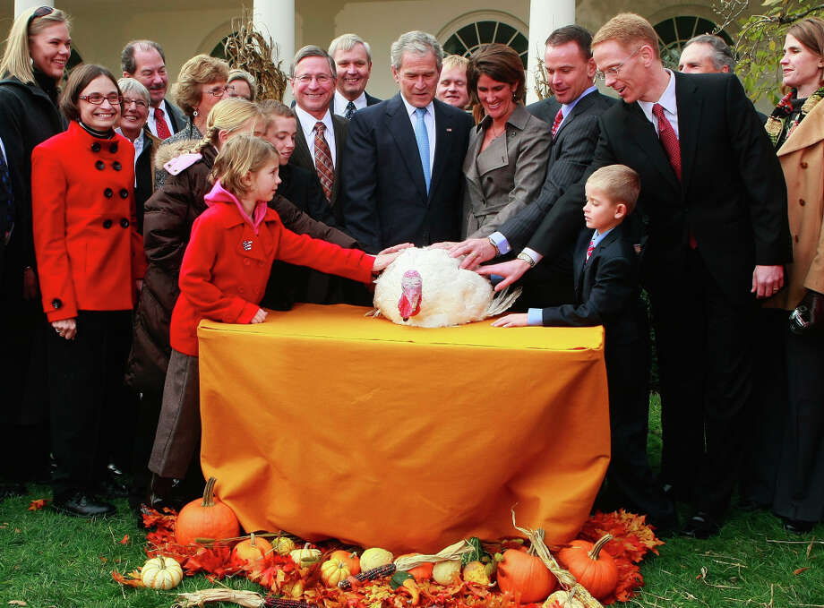U.S. President George W. Bush (C) pardons a turkey named Pumpkin during the annual White House Turkey Presidential Pardon presentation in the Rose Garden at the White House November 26, 2008 in Washington, DC. Later today Pumpkin will be flown to Disneyland and be an honorary grand marshal of Disney's Thanksgiving Day Parade in California.  The annual White House tradition that has held strong since President Harry S. Truman first pardoned a bird in 1947.   (Mark Wilson/Getty) Photo: Mark Wilson, Getty Images / 2008 Getty Images