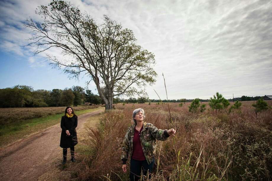 Sarah Mitchell, executive director of the Cook's Branch Conservancy, left, watches as Linda Campbell examines a native grass growing on the 5,650 acres in Montgomery County north of Houston, Wednesday, Nov. 14, 2012, in Montgomery.  Operated as a program of the Cynthia and George Mitchell Foundation, Cook's Branch Conservancy offers a rare glimpse into what nearly a century of regeneration looks like in the Pineywoods region of East Texas. Photo: Michael Paulsen, Houston Chronicle / © 2012 Houston Chronicle