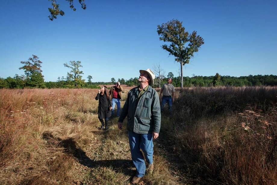 Scott Mitchell, center, looks into a tree along with his daughter Sarah Mitchell, executive director of the Cook's Branch Conservancy, right to left, Joe Hamrick and Eric Keith while at the 5,650 acres in Montgomery County north of Houston, Wednesday, Nov. 14, 2012, in Montgomery.  Operated as a program of the Cynthia and George Mitchell Foundation, Cook's Branch Conservancy offers a rare glimpse into what nearly a century of regeneration looks like in the Pineywoods region of East Texas. Photo: Michael Paulsen, Houston Chronicle / © 2012 Houston Chronicle