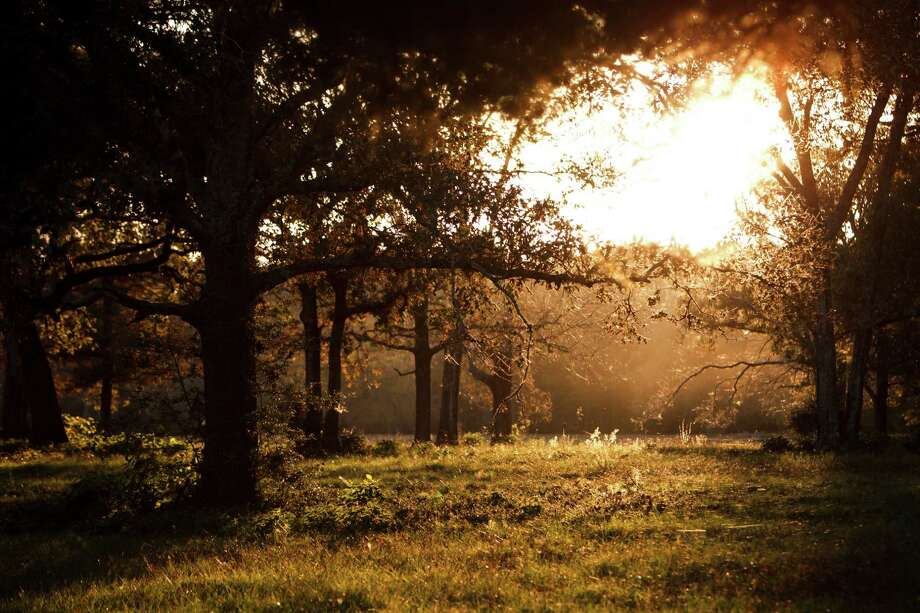 The sun sets over the 5,650 acres of Cook's Branch Conservancy in Montgomery County north of Houston, Wednesday, Nov. 14, 2012, in Montgomery.  Operated as a program of the Cynthia and George Mitchell Foundation, Cook's Branch Conservancy offers a rare glimpse into what nearly a century of regeneration looks like in the Pineywoods region of East Texas.  ( Michael Paulsen / Houston Chronicle ) Photo: Michael Paulsen, Staff / © 2012 Houston Chronicle