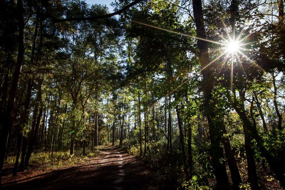 The sun sets over the 5,650 acres of Cook's Branch Conservancy in Montgomery County north of Houston, Wednesday, Nov. 14, 2012, in Montgomery. Photo: Michael Paulsen, Houston Chronicle / © 2012 Houston Chronicle