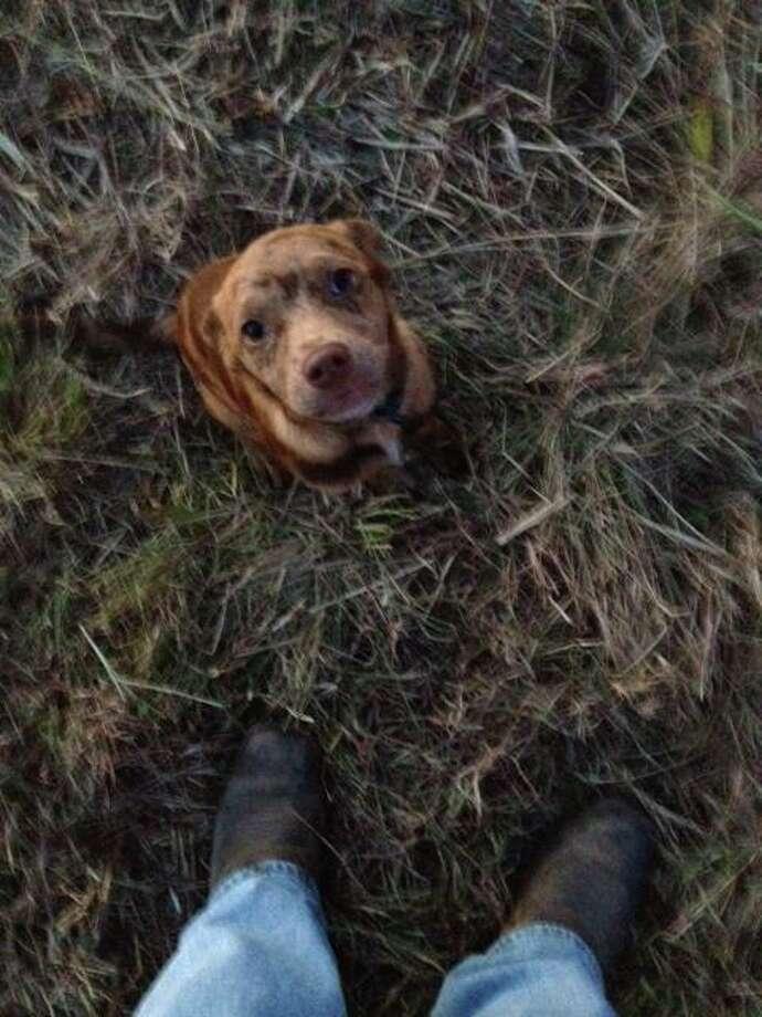 Dog found during Thanksgiving pileup on Interstate 10.  Jesi Courville/Facebook Photo: Jesi Courville