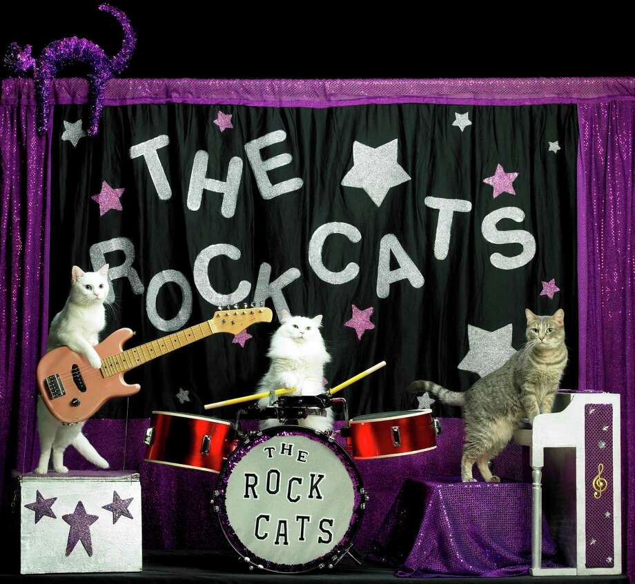 The Rock Cats are part of the Amazing Acro-Cats, a touring animal act. Photo: Courtesy Photo