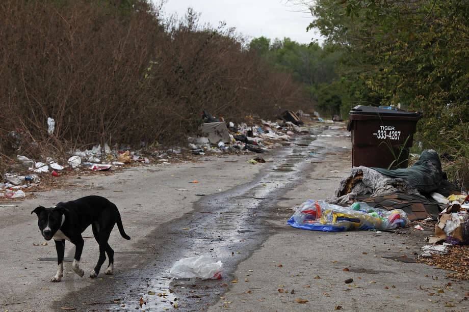 A dog forages for food in trash lining an alley in the Camelot II neighborhood on the Northeast Side. Some landlords have been charged with maintaining a public nuisance. Photo: Lisa Krantz, San Antonio Express-News / © 2012 San Antonio Express-News
